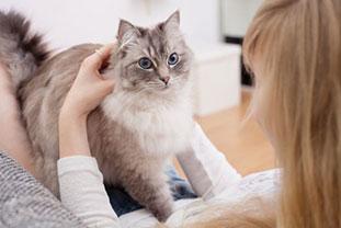 Allergene aus der Luft: Haustiere Bild: Frau streichelt Katze, die auf ihrem Schoß steht.