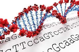 Epigenetische Risikofaktoren bei Allergien. Grafik einer DNA-Doppelhelix, darunter eine schriftliche DNA-Basensequenz..