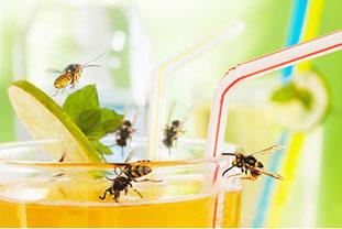 Wespen an einem Getränk