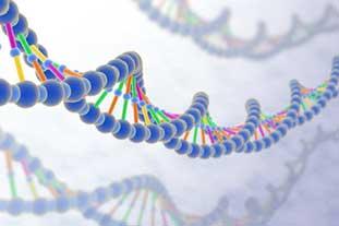 Künstlerische Darstellung des Erbguts: Zu sehen sind drei DNS-Stränge, der mittlere ist farblich intensiver. Die einzelnen Basenpaaren sind farblich voneinander abgesetzt