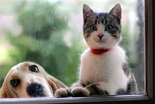 Hund und Katze gucken von draußen durch ein Fenster hinein