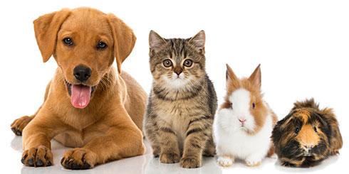 Hund, Katze, Kaninchen und Hamster liegen nebeneinander auf dem Boden und schauen aus dem Bild heraus