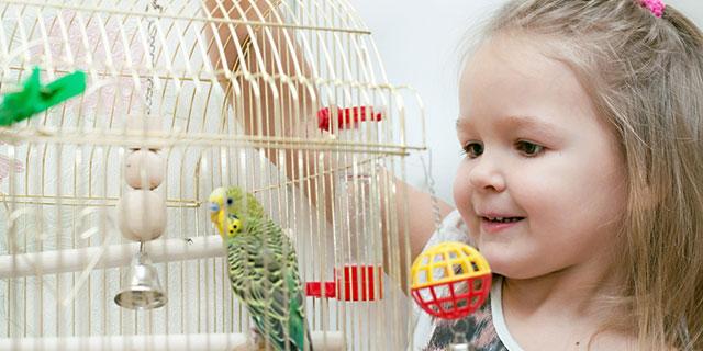 Kind mit Wellensittich als Haustier - Risiko für Exogene allergische Alveolitis