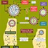 Schema mRNA-Impfstoffentwicklung - ©Usman-Zafar-Paracha_AdobeStock