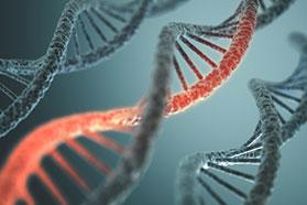DNA-Molekül. Ein kleiner Abschnitt ist rot eingefärbt.