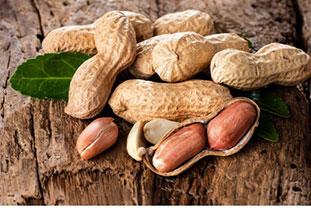 Erdnüsse auf Baumrinde