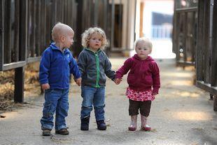 Drei Kleinkinder halten sich an den Händen. Sie stehen in einem Stall.